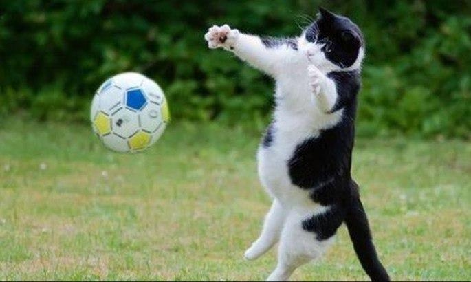 Весь мир - обман. Ролик про невероятного кота-вратаря оказался подделкой. ВИДЕО