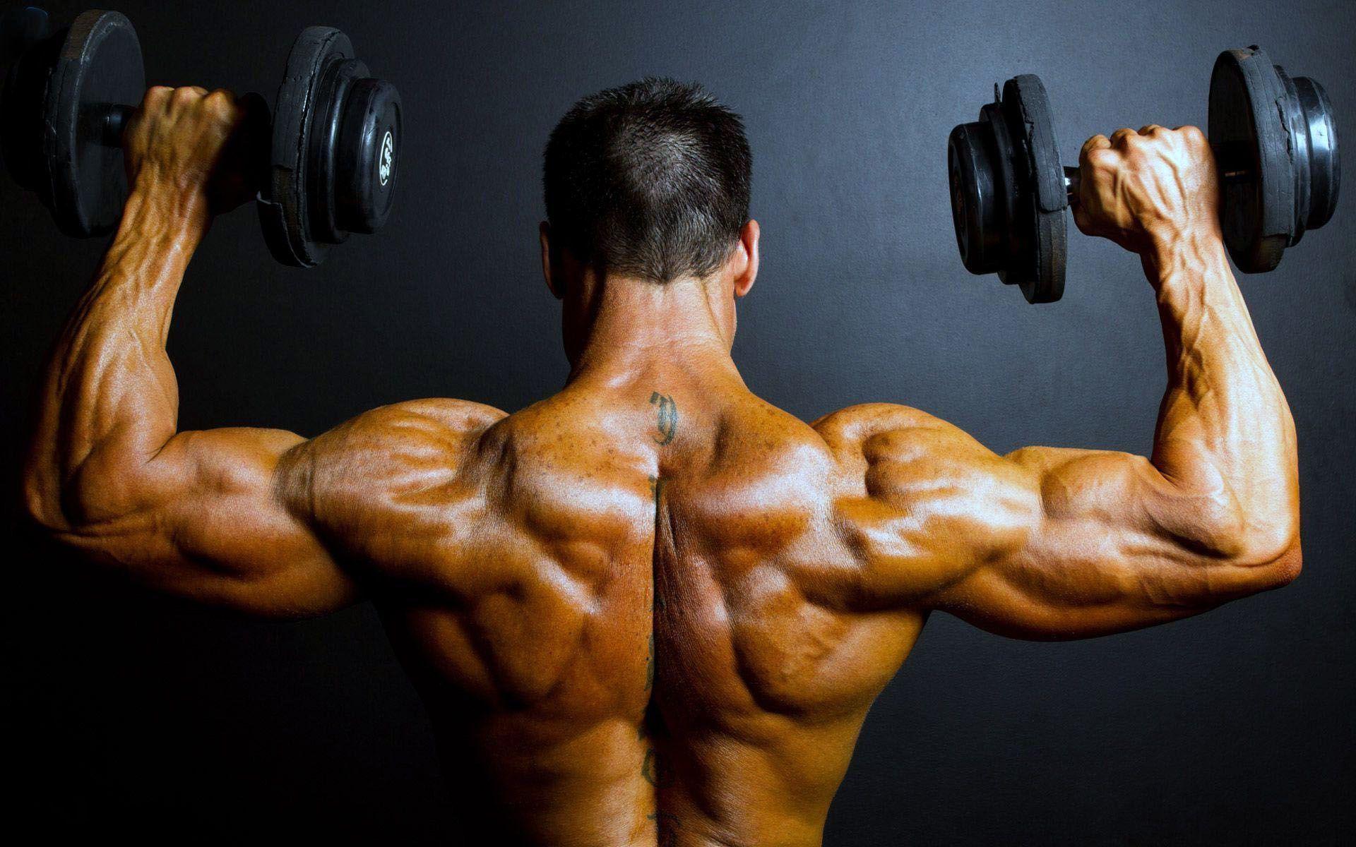 Тренировка плеч: упражнения и программа - изображение 1