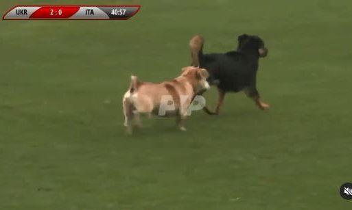 Две собаки и лошадь едва не сорвали матч сборных Украины и Италии среди глухих